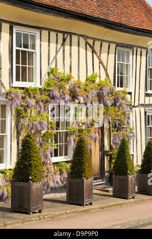 Wisteria floribunda growing around a picturesque yellow timbered house front in historic village of Lavenham, Suffolk, - Stock Photo