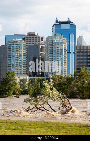 Saturday, June 22, 2013. Water continues to overflow the banks of the Bow River the day after peak flood levels - Stock Photo