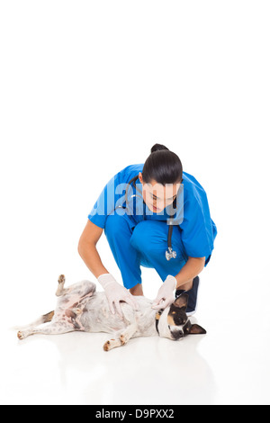 pretty veterinarian nurse checking on pet dog's skin isolated on white - Stock Photo