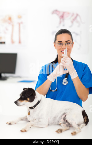 beautiful veterinarian preparing pet dog vaccination in office - Stock Photo
