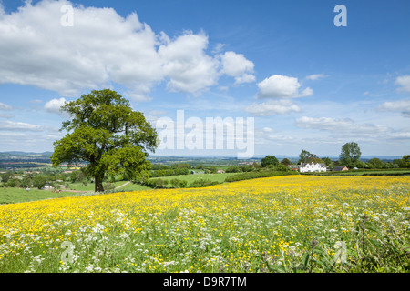 A view across wildflower meadows from the Marcle Ridge near Much Marcle, Herefordshire, England, UK - Stock Photo