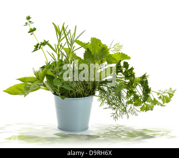 Fresh Herbs In A Pot - Stock Photo