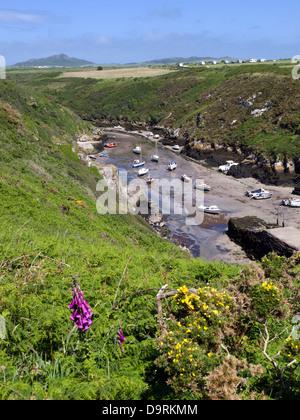 Porth Clais near St Davids, Pembrokeshire Wales - Stock Photo