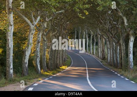 an avenue of plain trees on a road nr Soreze, Tarn, Languedoc, France - Stock Photo