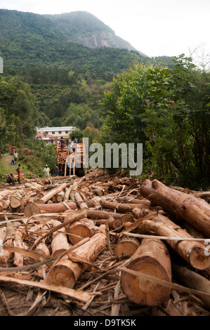 deforestation logs of timber from forest kerala India - Stock Photo