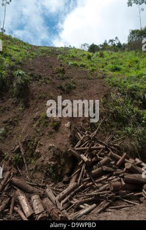 Deforestation India - Stock Photo