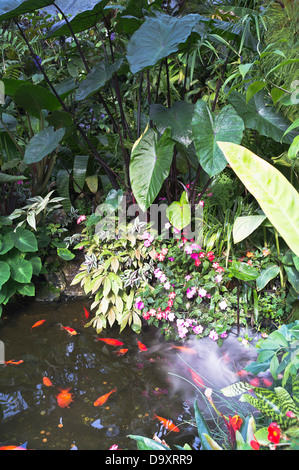 dh Pukekura Park NEW PLYMOUTH NEW ZEALAND Fernery and Display Houses fish in hot house pond botanical gardens