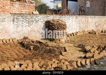 India, Uttar Pradesh, Aligarh, cow pats drying in the sun ready for burning as fuel - Stock Photo