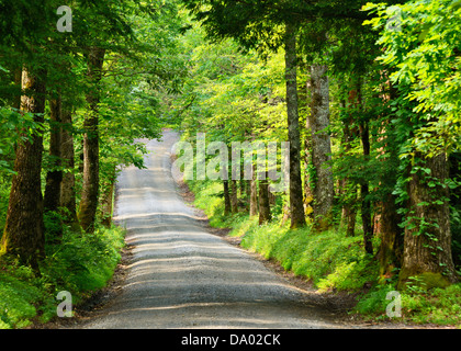 Sparks lane at Cades Cove in The Great Smoky Mountain National Forest near Gatlinburg, Tennessee, USA. - Stock Photo