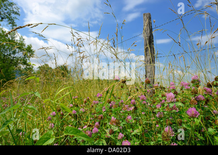 Wildflowers near an old fence on Sparks Lane in Cades Cove, Great Smoky Mountains National Park. - Stock Photo