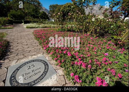 Rose Garden, The Company's Garden, Cape Town, South Africa - Stock Photo