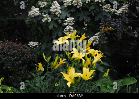Day lilies and oak leaf hydrangea blooming in Battery Park City, a neighborhood in lower Manhattan. - Stock Photo