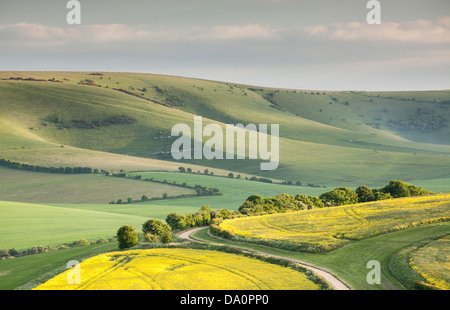 The undulating hills of the South Downs National Park - Stock Photo