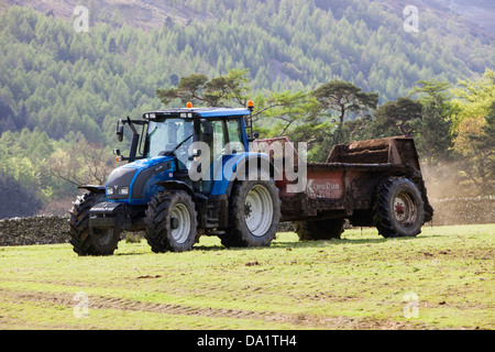A farmer spreading cow muck on a field in Buttermere, Lake District, UK. - Stock Photo
