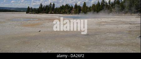 Sunny view across broad grey sinter plain to steaming Celestine Pool, trees, boardwalk tourists, Lower Geyser Basin, - Stock Photo