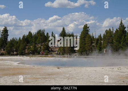 Blue sky white clouds view blue steaming waters Celestine Pool, below Lodgepole Pines hillside, Lower Geyser Basin, - Stock Photo
