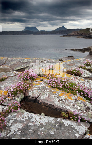 Rocks covered in Thrift and lichen under a dramatic sky on the shoreline of Enard Bay, Sutherland, North West, Scotland, - Stock Photo