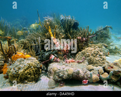 Underwater reef with beautiful colors of sea sponges and corals - Stock Photo