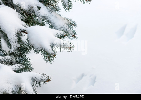 Winter evergreen tree branches under fluffy snow with copy space - Stock Photo
