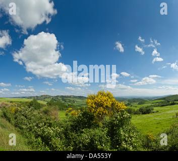 Casole d'Elsa, Italy, Europe, Tuscany, Toscana, hedges, hills, sky, - Stock Photo