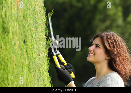 Close up of a gardener woman pruning a cypress with a pruning scissors, - Stock Photo