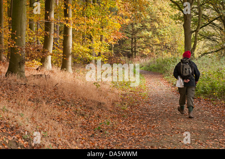 In autumn, man walking on quiet, curving path covered in orange brown fallen leaves in scenic woodland - Lindley - Stock Photo