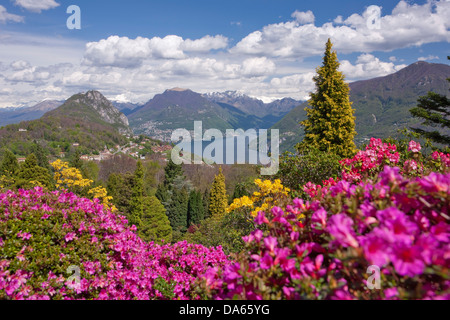 blossom, rhododendron, Parco San Grato, Carona, canton, TI, Ticino, South Switzerland, flower, flowers, park, Switzerland, - Stock Photo