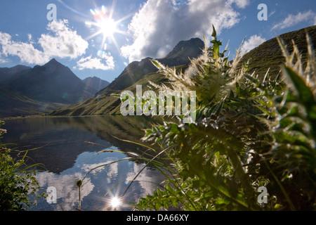 Thistle, Alplisee, Arosa, canton, GR, Graubünden, Grisons, mountain lake, lake, flower, flowers, sun, Switzerland, - Stock Photo