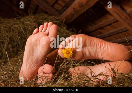 Couple, alpine hut, sleeping, hay, mountain, mountains, canton, Bern, Bernese Oberland, agriculture, holidays, farm, - Stock Photo