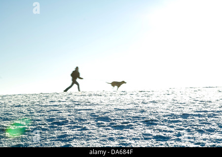 Dog Sport - Man Trailing - Stock Photo