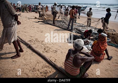 Fishermen removing fish from nets on the beach. Puri, Orissa, India - Stock Photo