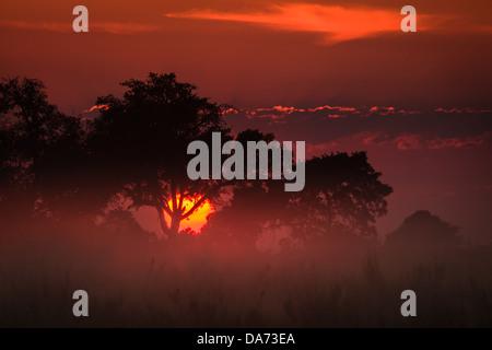 Brilliant orange sun appears at sunrise to illuminate the clouds and grasslands in the Okavango Delta, Botswana, - Stock Photo