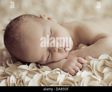 Beautiful sleeping newborn baby on petals - Stock Photo