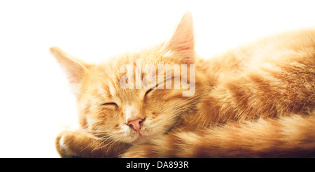 peaceful orange tabby male kitten curled up sleeping - Stock Photo
