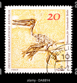 Postage stamp from East Germany (DDR) depicting a fossil of a flying reptile (Pterodactylus kochi) - Stock Photo