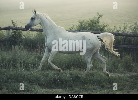 Picture of white horse with rular landscape in background - Stock Photo