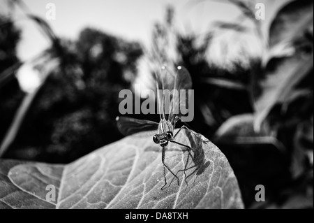 Dragonfly on a leaf - Stock Photo