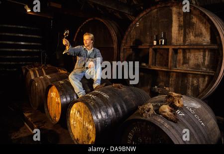 Cider in barrels. - Stock Photo