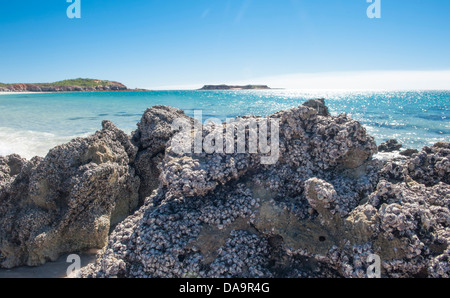 Rocks and mussel shells at the sandy eastern beach of Cape Leveque, Dampier Peninsula, Kimberley, Western Australia