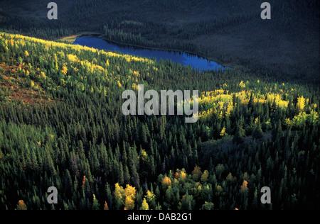Denali, National Park, Alaska, USA, autumn, colors, lush forest, lake, hills, sunny, low sun, wildlife - Stock Photo
