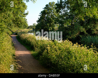 Towpath on The Grand Western Canal near Sampford Peverell, Devon. UK - Stock Photo