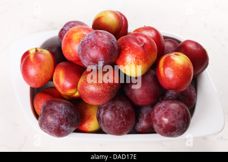 Nectarines and Plums in a ceramic dish. - Stock Photo