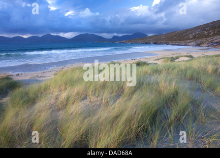 Beach at Luskentyre with dune grasses blowing in the foreground, Isle of Harris, Outer Hebrides, Scotland - Stock Photo