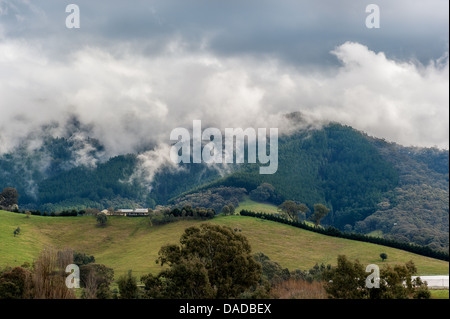 Lush green rolling hills of farmland and blue skies in the Australian state of Victoria. - Stock Photo