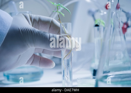 Scientist holding test tube with seedling - Stock Photo