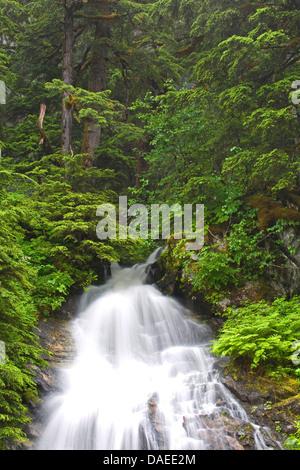 mountains waterfalls forest usa - photo #15