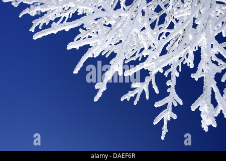 Snow covered branch against blue sky, Germany - Stock Photo