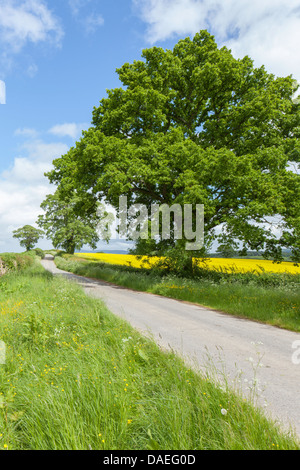 Shropshire country lane in springtime, England, UK - Stock Photo