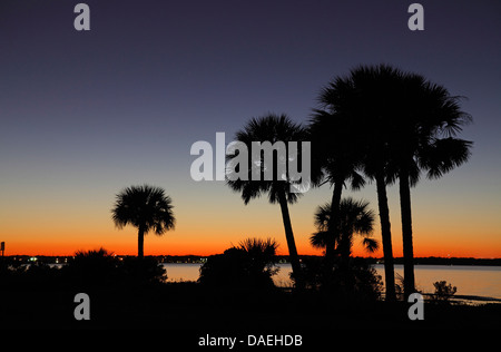 palm trees at the seaside at sunset, USA, Florida, Merritt Island - Stock Photo