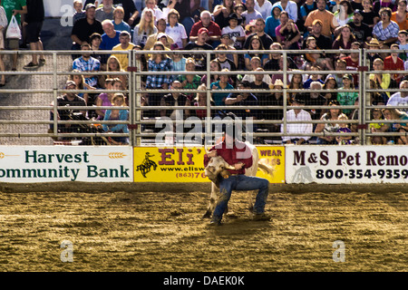 Steer wrestling event at the rodeo, Cowtown, New Jersey, USA - Stock Photo